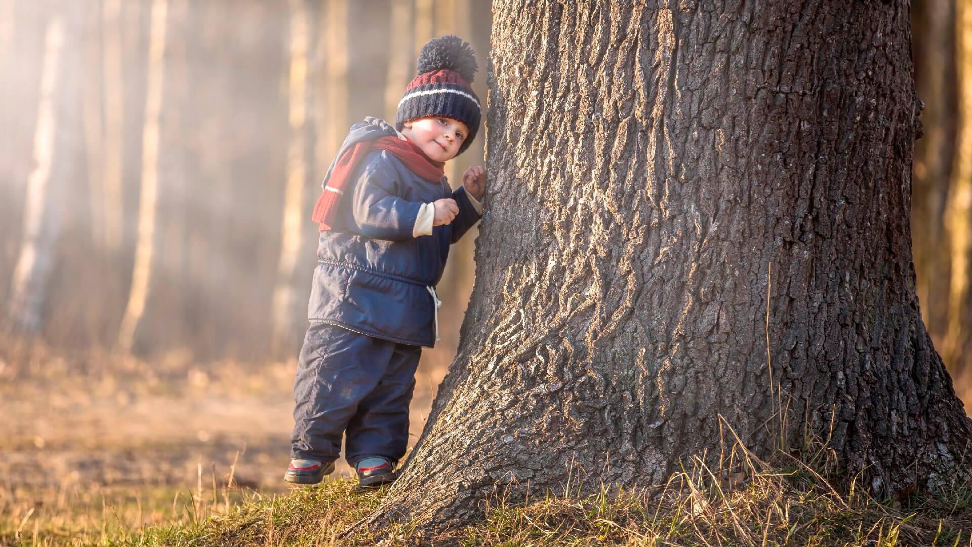 К проекту «Наше дерево» присоединиться не сложно. К проекту «Наше дерево» присоединиться пора - фото 2