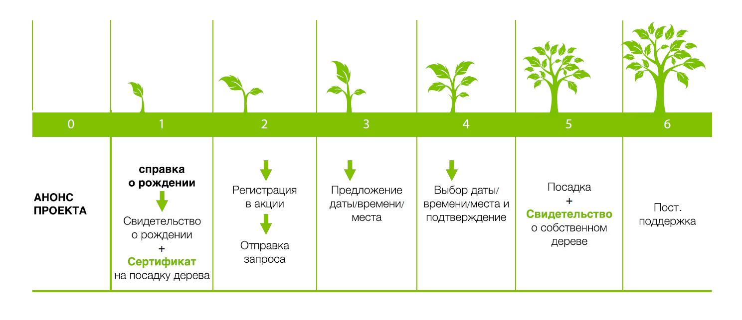 К проекту «Наше дерево» присоединиться не сложно. К проекту «Наше дерево» присоединиться пора - фото 6