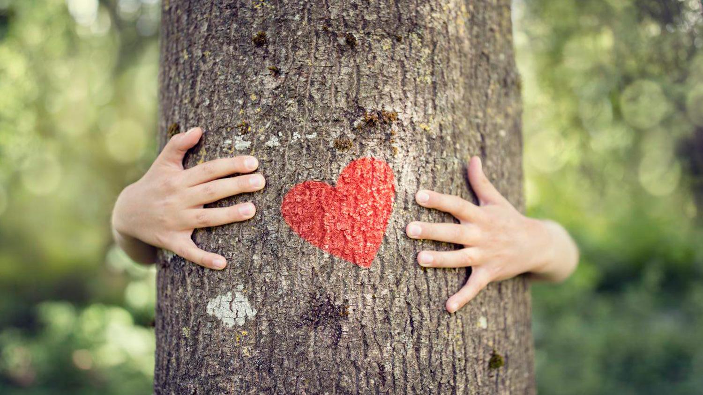 К проекту «Наше дерево» присоединиться не сложно. К проекту «Наше дерево» присоединиться пора - фото 7